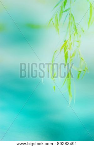 green leaves on blurred background