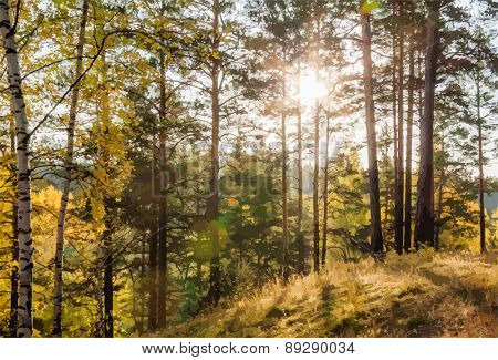 Yellow autumn forest at sunset, vector