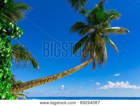 Beach Heaven Dream