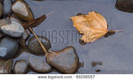 Leaf on still water among pebble