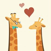 Постер, плакат: Two Giraffes