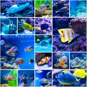 stock photo of saltwater fish  - Collage of photos colorful fish in aquarium saltwater world - JPG