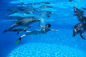stock photo of dolphins  - Girl under water communicates and with the dolphins - JPG