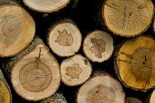 image of woodstock  - Background of cut wood logs stacked in a pile - JPG
