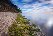 pic of green algae  - Baltic shore - JPG
