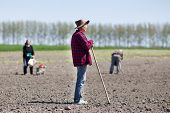 stock photo of hoe  - Senior peasant with hoe standing on fertile land other peasants hoeing and sowing in background - JPG