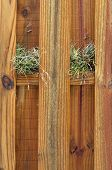 picture of stockade  - A wet wooden stockade fence with air plants growing on the cross beam on a rainy day - JPG