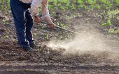 stock photo of hoe  - Senior farmer hoeing vegetable garden in springtime - JPG