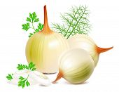 picture of onion  - Onions and onion rings with green herbs - JPG