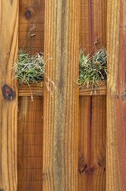 image of stockade  - A wet wooden stockade fence with air plants growing on the cross beam on a rainy day - JPG