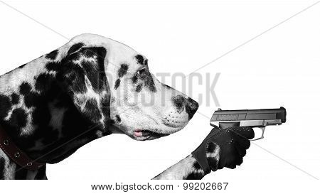 Dalmatian Dog With Guns