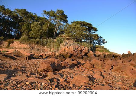 Pine woods and coved beaches. In northwestern France. Brehat island