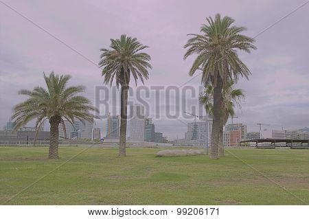 Three tropic palms on Twilight background Barcelona Spain hdr
