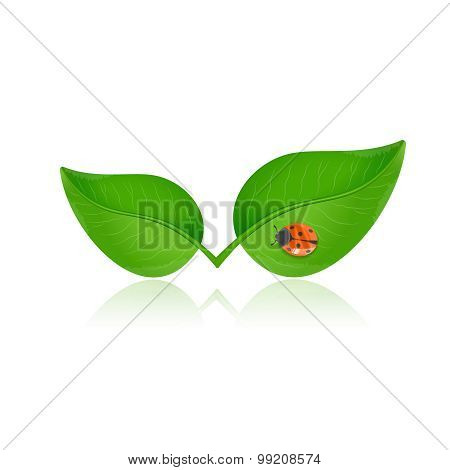 Green Leaf With Ladybird