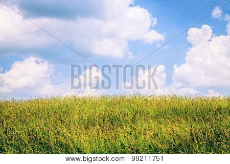 Field of tall grass in Central Kentucky