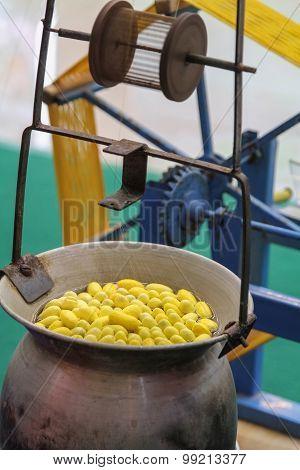 Boiling Silkworm cocoon in a pot to prepare thread silk.