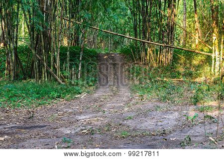 Trail Road In Bamboo Forest.