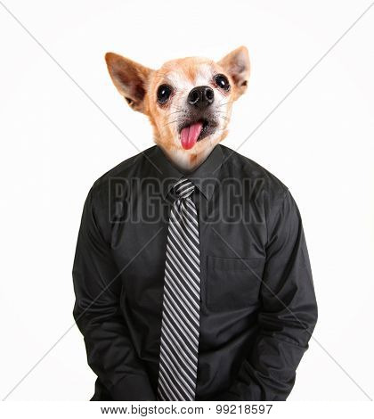portrait of a chihuahua dog as a business looking off to the side man wearing a suit and red tie isolated on a white  background