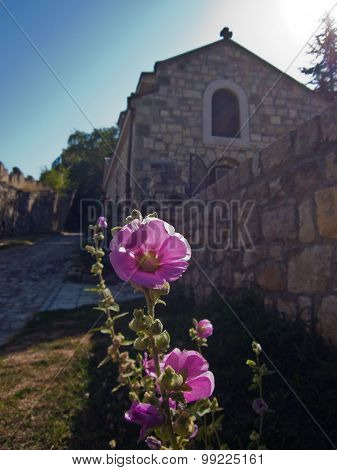 Closeup of a beautiful flower in front of a church at Kalemegdan fortress, Belgrade