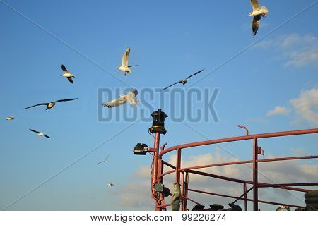 Flight Of Seagulls Over A Vessel