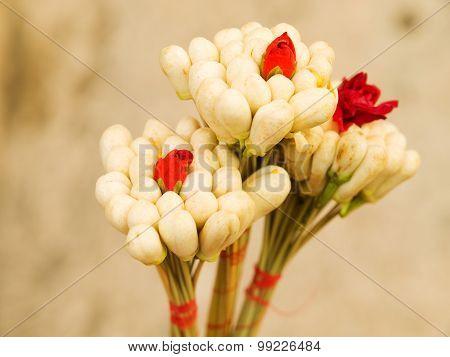 Jasmine Blossom In Tunisia