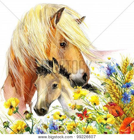 Horse and foal with meadow flowers. watercolor illustration