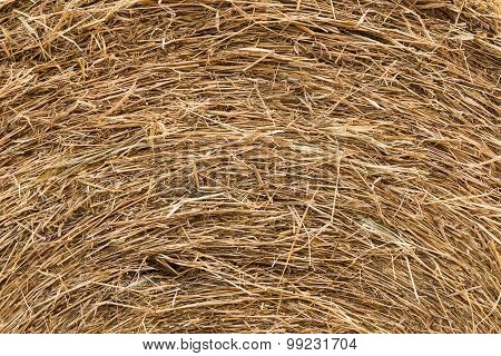 Background And Texture Of Dry Straw