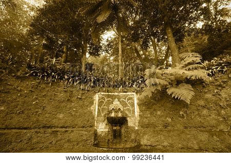 Ancient Fountain And Subtropical Forest In Sepia Tone. Azores. Portugal