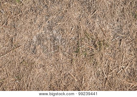 Drought Killed Grass