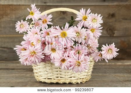 Lilac chrysanthemums