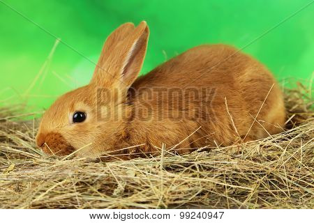 Young Red Rabbit In Hay On Green Background
