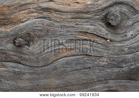 Lodgepole Pine Wood Detail