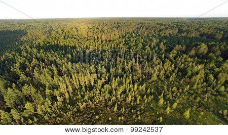 Northern Conifer Forest