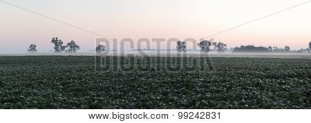Soybean Field Panorama