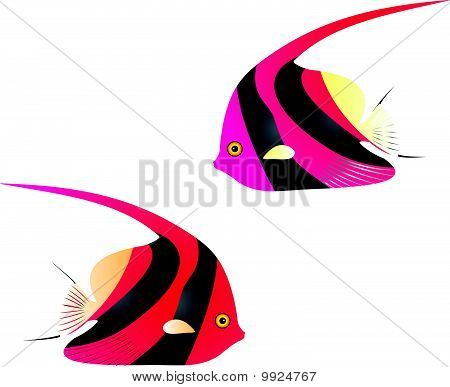 Angelfish vector