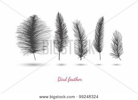 Decorative feathers.