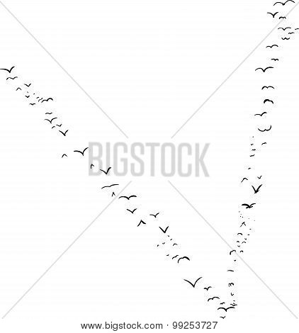 Bird Formation In V