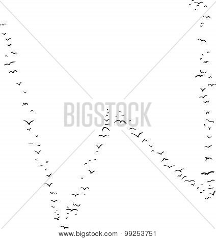Bird Formation In W
