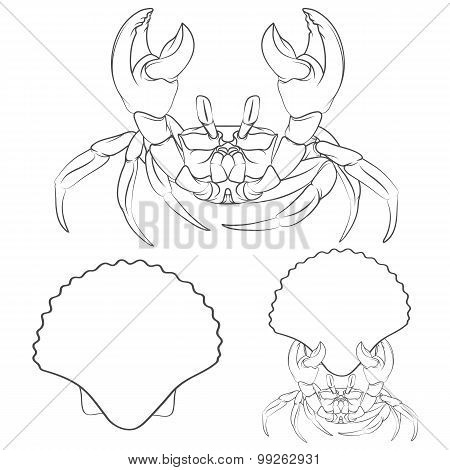 Image with shell crab claws in