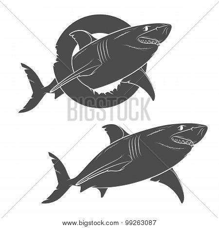 Vector drawing of a terrible shark