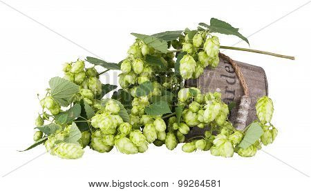 Branch Plants Hops, With Leaves And Bumps Lying In A Wooden Bucket