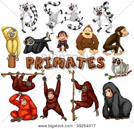 Different kind of primates illustration