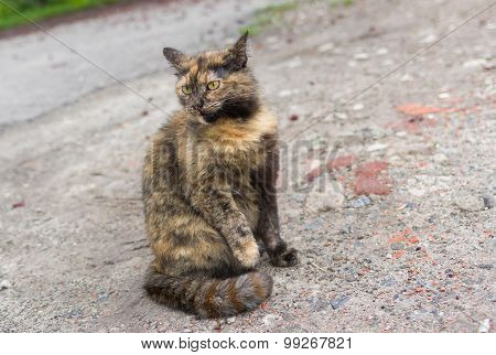 Three colored cat with striped tail sitting on the ground