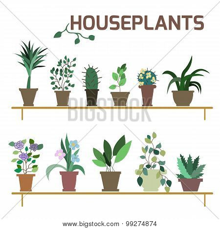 Vector Set of indoor plants in pots.