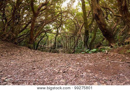 Laurel Forest