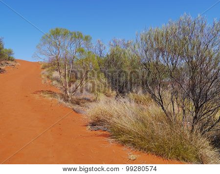 The red earth of the outback of Australia