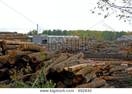 Sawmill Operation