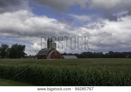 Corn Crop Beneath Summer Skies