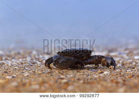 Crab Sitting On Sea Coast