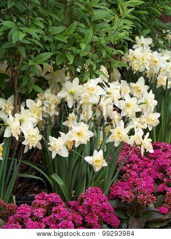 Spring Splendor